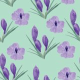 Beautiful orchid violet and crocuses flowers illustration Royalty Free Stock Photos