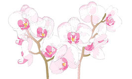 Beautiful Orchidaceae Royalty Free Stock Photography