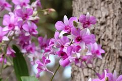 Beautiful Orchidaceae. Orchidaceae rainy season Stock Photography