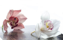 The beautiful orchidea with background Stock Photography