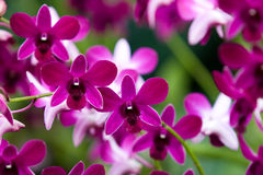 Beautiful Orchids. Orchid plants and plowers in a park Royalty Free Stock Photography
