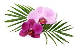 Beautiful orchids Royalty Free Stock Photos
