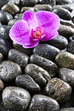 Beautiful orchids, black stones, drops of water on Stock Photo