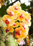 Beautiful orchids in bloom royalty free stock photos