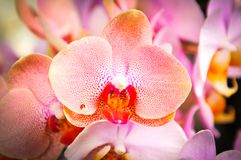 Beautiful orchids in bloom stock photo