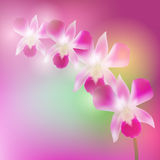 Beautiful Orchids on blurred blue pink background. Vector Royalty Free Stock Image