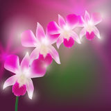 Beautiful Orchids on blurred dark background. Vector Stock Photography