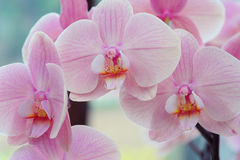 Beautiful orchids close up. Toned image Stock Photography