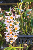 Beautiful orchids flower tree Stock Images