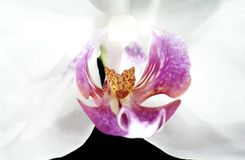 Beautiful orchids are highlighted on a dark background, flowers bloomed, orchids bloomed, Orchidaceae, green, black, pink, purple, stock photo