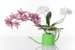 Beautiful orchids  over white background Royalty Free Stock Photos