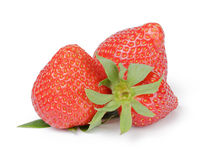 Beautiful organic fresh strawberries directly from Royalty Free Stock Image