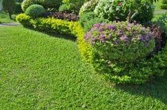 Beautiful ornament plant Stock Photo