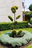 Beautiful ornamental plant Stock Photos