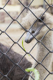 Beautiful  ostrich. Beautiful funny ostrich close-up of the fence Stock Photo
