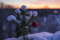 Beautiful outdoor photo of red christmas decoration ball in small snowy tree. Wonderful cold winter dusk evening in Sweden Scandinavia. Nice details and blue royalty free stock photos