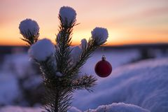 Beautiful outdoor photo of red christmas decoration ball in small snowy tree. Wonderful cold winter dusk evening in Sweden Scandinavia. Nice details and blue royalty free stock image