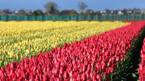 Beautiful outdoor scenery in Netherlands Stock Images
