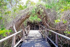Beautiful outdoor view of wooden path close to mangrove on San Cristobal Island, Galapagos Islands stock photo