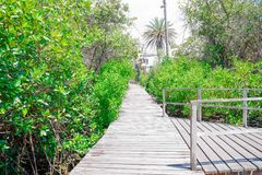 Beautiful outdoor view of wooden path close to mangrove on San Cristobal Island, Galapagos Islands royalty free stock photos