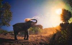 Beautiful outdoor view of young elephants walking near the riverbank in the nature, at Elephant jungle Sanctuary, in. Beautiful outdoor view of young elephants royalty free stock image