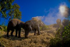 Beautiful outdoor view of young elephants walking near the riverbank in the nature, in Elephant jungle Sanctuary, during. A gorgeous sunny day playing with dry stock photos