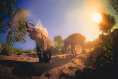 Beautiful outdoor view of young elephants walking near the riverbank in the nature, at Elephant jungle Sanctuary, in. Beautiful outdoor view of young elephants royalty free stock photo