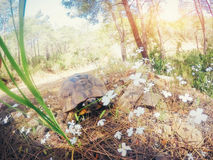 Beautiful overland turtle crawling on a sandy beach. Stock Image