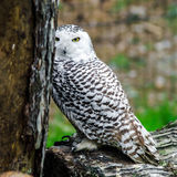 Beautiful owl in a forest Stock Photo