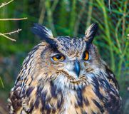 Beautiful owl portrait Royalty Free Stock Photos