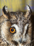 Beautiful owl's eye. And beak on abstract background Stock Images