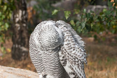 Beautiful owls in the park. Beautiful owls sitting on a trink in the park Royalty Free Stock Photos