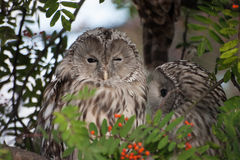 Beautiful owls in the park Stock Photography