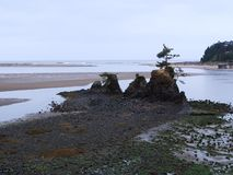 Beautiful Pacific Ocean Beach Beauty. Beautiful scenery of sand, rock formations,  and the ocean at the Siletz Bay at the mouth of Schooner Creek just south of royalty free stock photography