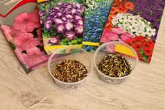 Beautiful packages with seeds of annual flowers and seed jars. Seeds of annual flowers in bags and in bulk in jars lie on a wooden surface stock images