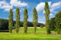 Beautiful paddock on a nice day. Summer landscape with a paddock at the edge of a wood, blue sky and a row of tall poplar trees royalty free stock images
