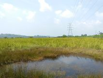 Beautiful paddy-field location of agriculture natural photos royalty free stock photo