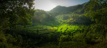Beautiful Paddy Field Stock Images