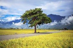 Beautiful paddy place Stock Photo
