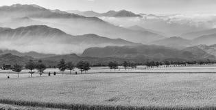 Beautiful paddy place (b/w) Stock Photos