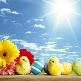 Easter eggs and flowers Stock Image