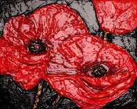 Beautiful painted poppy Stock Photos