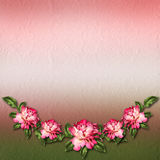 Beautiful painted rose on abstract background for congratulation Stock Photos