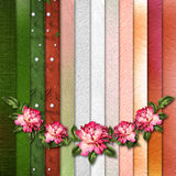 Beautiful painted rose on abstract background for congratulation Royalty Free Stock Image