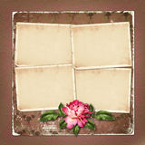Beautiful painted rose with frames for congratulations Stock Photography