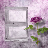 Beautiful painted rose with frames for congratulations Royalty Free Stock Images