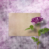 Beautiful painted rose with frames for congratulations Royalty Free Stock Photo