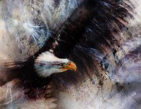 Beautiful painting of  mighty flying golden eagle on abstract background Royalty Free Stock Photos