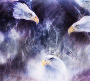 Beautiful painting of  eagles on an abstract background collage.. Royalty Free Stock Image