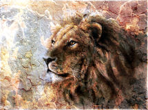 Beautiful  painting of a lion head with a Stock Images